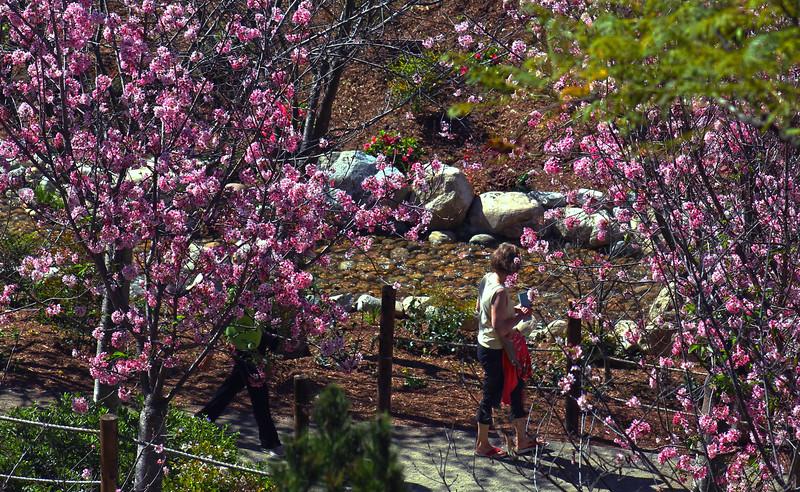 San Diego, Japanese Friendship Garden