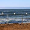 San Diego Beaches, Sea Gulls, Sunset Cliffs