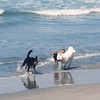 San Diego Beaches, Dogs in Surf