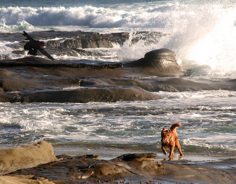 San Diego Beaches, Dog & Del Mar Surf