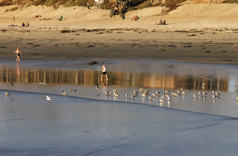 San Diego Beaches, Sea Gulls and Walkers