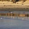 San Diego Beaches, Sea Gulls and Walkers