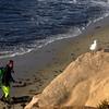 San Diego Beaches, Diver and Sea Gull
