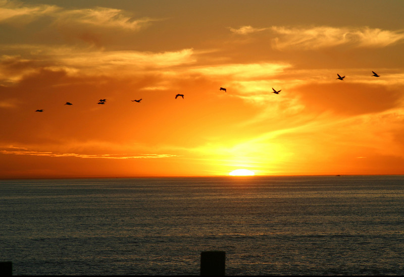 San Diego Beaches, Sea Birds and San Diego Sunset