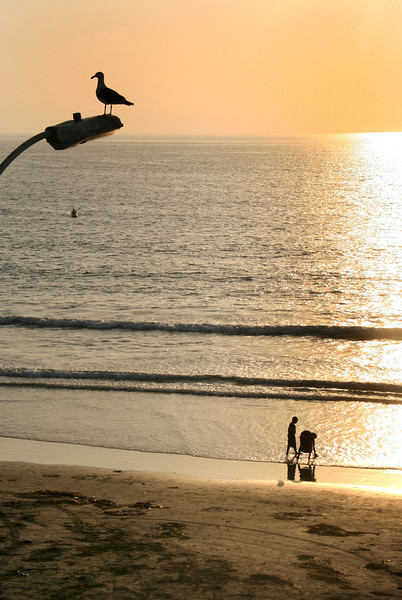 San Diego Beaches, Seagull & Strollers at Sunset