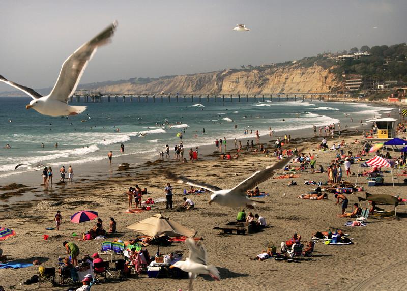 San Diego Beaches, Sea Gulls Above La Jolla Shores