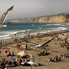 San Diego Beaches, Sea Gulls Above La Jolla Shores