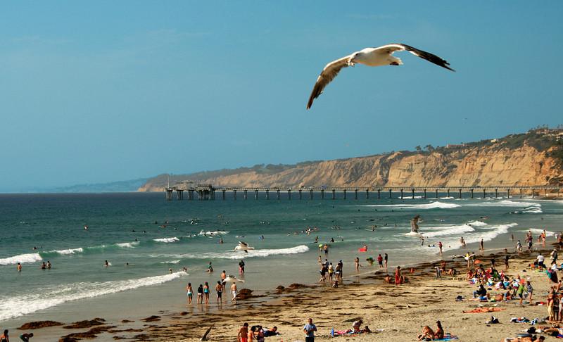 San Diego Beaches, Scripps Pier from La Jolla Shores