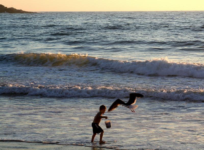 San Diego Beaches, Boy & Seagull in Surf