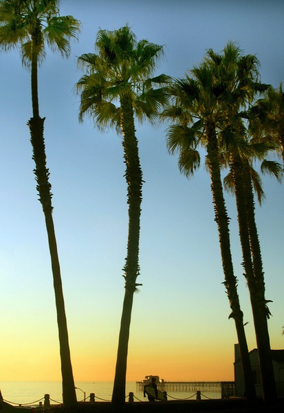 San Diego Beaches, Palms and View on Oceanside Pier