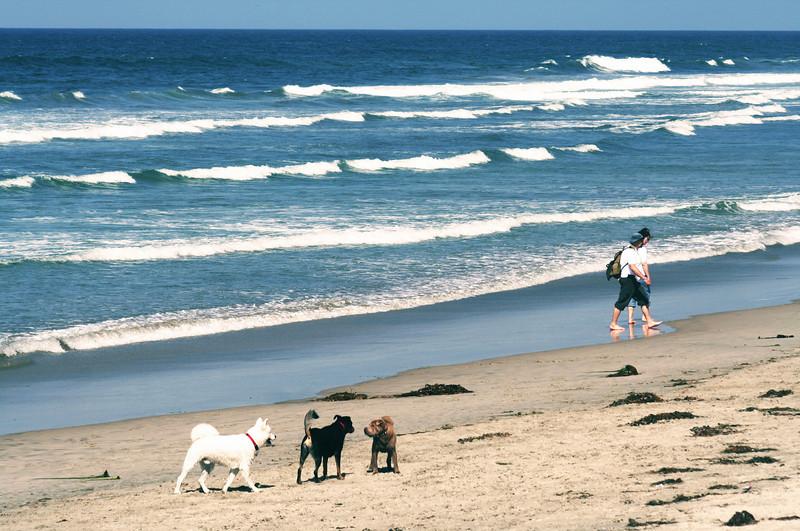 San Diego Beaches, Dogs on Del Mar Beach