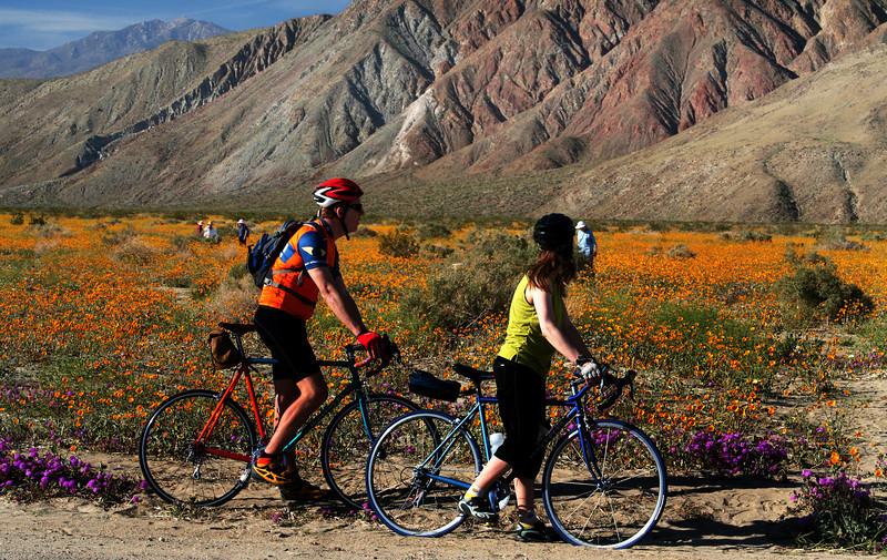 Biking in Borrego Springs with Desert Flowers in Bloom