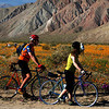 Biking in Borrego Springs with Desert Flowers in Bloom