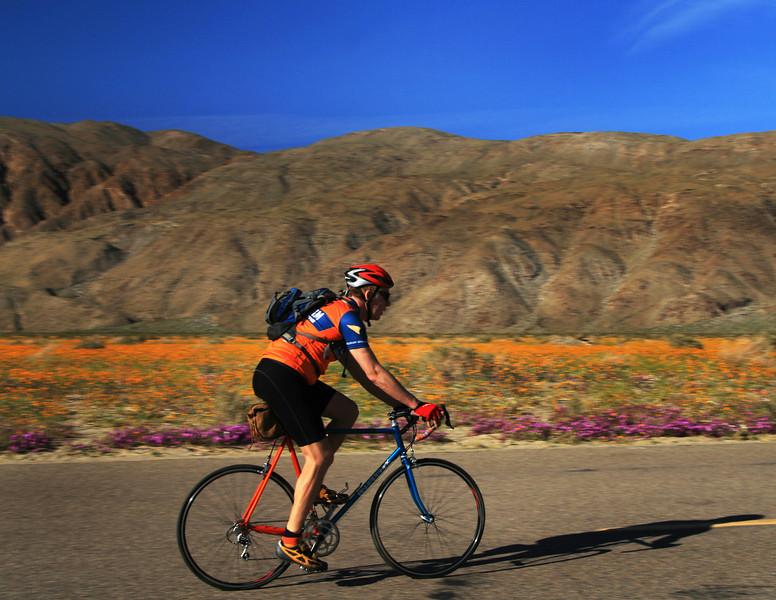 Biker in Borrego Springs with Desert Flowers in Bloom