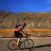 Biker in Borrego Springs with Desert Flowers in Bloom