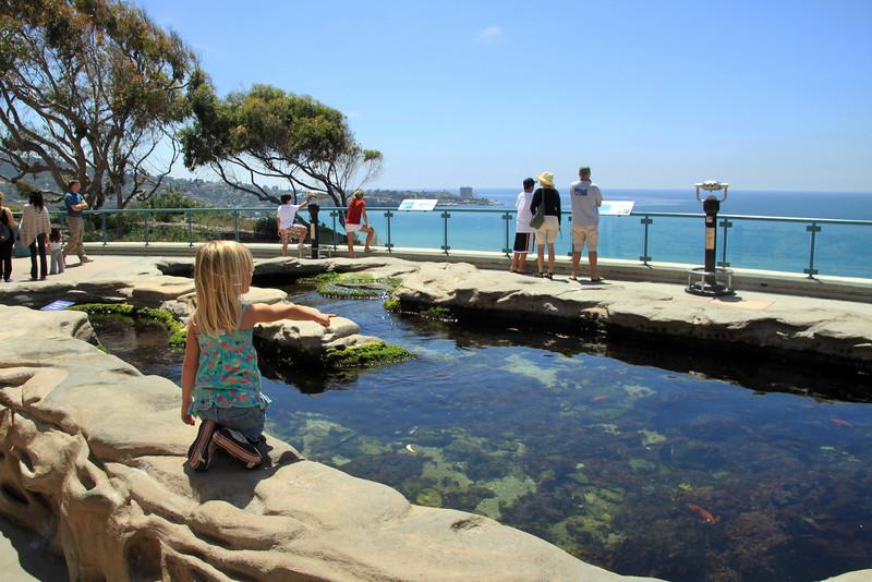 Scripps Aquarium La Jolla, Tide Pool Exhibit