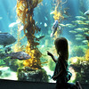 Birch Aquarium at Scripps, Child at Kelp Forest Tank
