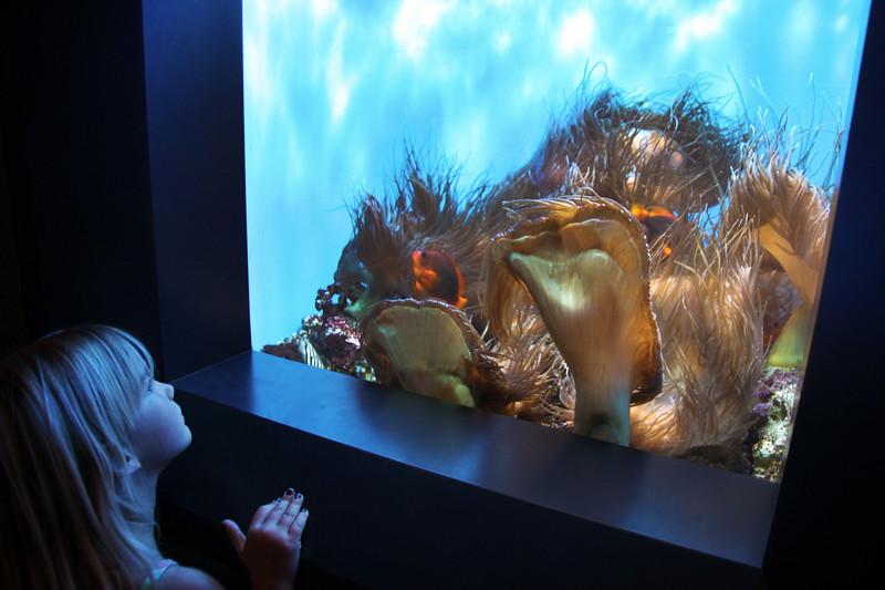 Birch Aquarium at Scripps, Child and Golden Fish