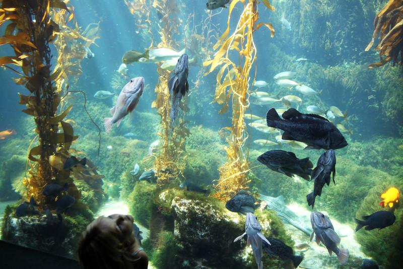 Birch Aquarium at Scripps, Child Viewing Fish