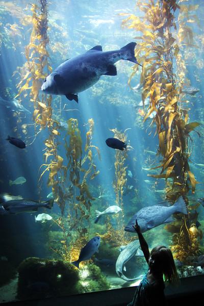 Birch Aquarium at Scripps, vert, Child at Kelp Forest Tank