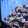 Scripps Aquarium La Jolla, Child and Corals
