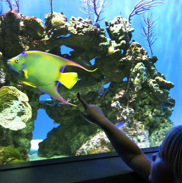 Birch Aquarium at Scripps, Colorful Fish