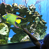 Birch Aquarium at Scripps, Colorful Fish