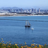 Cabrillo National Monument, View on San Diego Skyline with Spring Flowers