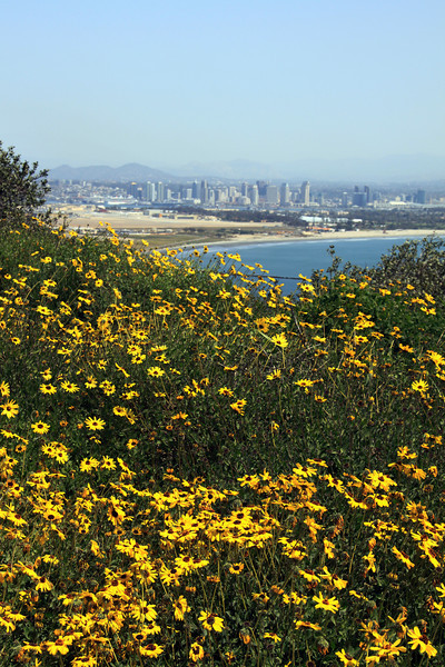 Cabrillo National Monument, View on San Diego with Spring Flowers