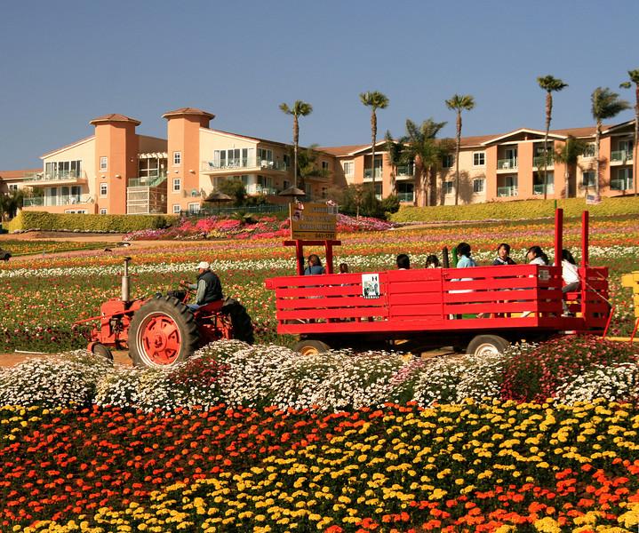 Carlsbad Flower Fields, Tractor Ride