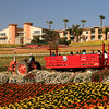 Carlsbad Flower Fields, Tractor Ride