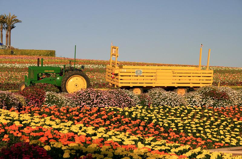 Carlsbad Flower Fields, Tractor in Sea of Flowers