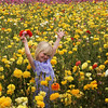 Carlsbad Flower Fields, Child and Yellow Ranunculus