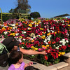 Carlsbad Flower Fields, Mother & Child