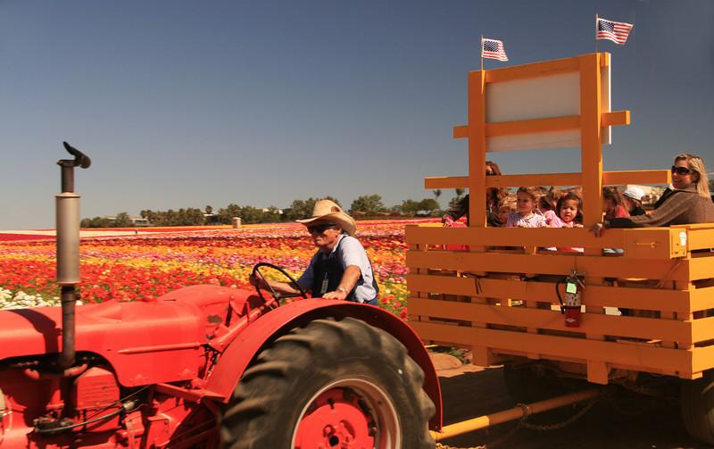 Carlsbad Flower Fields, Tractor Driver