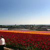 Carlsbad Flower Fields, View Over Carlsbad to Pacific