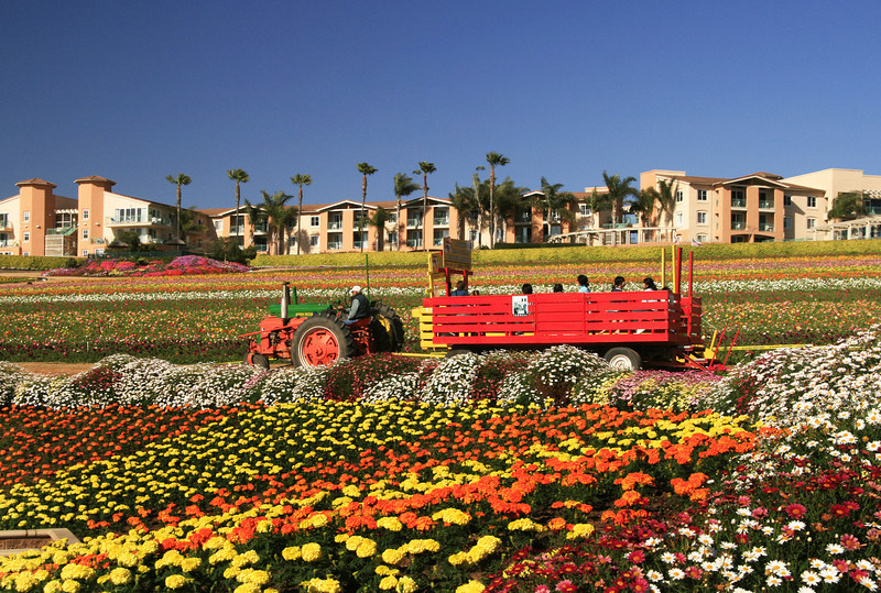 Carlsbad Flower Fields, Tractor Ride, Grand Pacific Palisades Resort