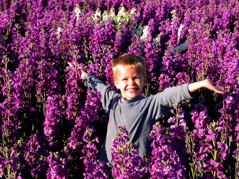 Carlsbad Flower Fields, Boy in Sea of Purple