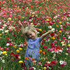 Carlsbad Flower Fields, Child in Ranunculus Field, portrait