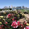 Coronado, Rose Garden in Spring