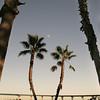 Coronado, View on Coronado Bridge with Palms