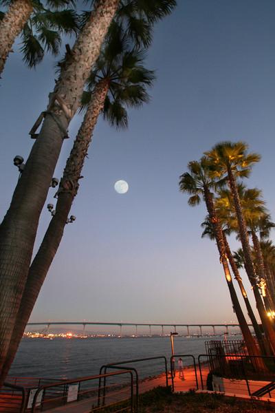 Coronado, Evening View Through Palms to Coronado Bridge