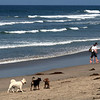 San Diego Beaches, Dogs on Del Mar Beach