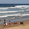 San Diego Beaches, Kids & Dogs on Del Mar Beach