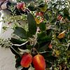 January Anna Apples