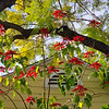 Winter poinsettia tree