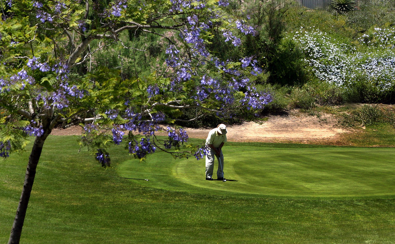 Eastlake Golf Course, Putting under Spring Blooms