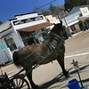 Horse Waiting for Riders in Julian California