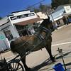 Horse Waiting for Riders in Julian California