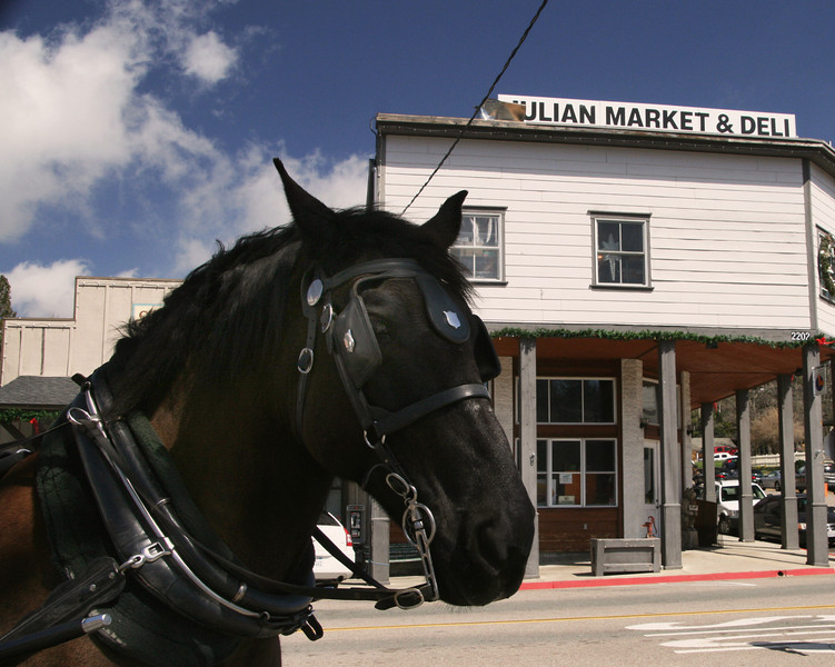 Carriage Horse in Julian California